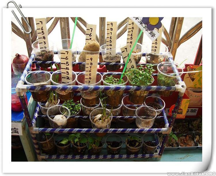 幼儿园小班自然角布置图片:成长记录