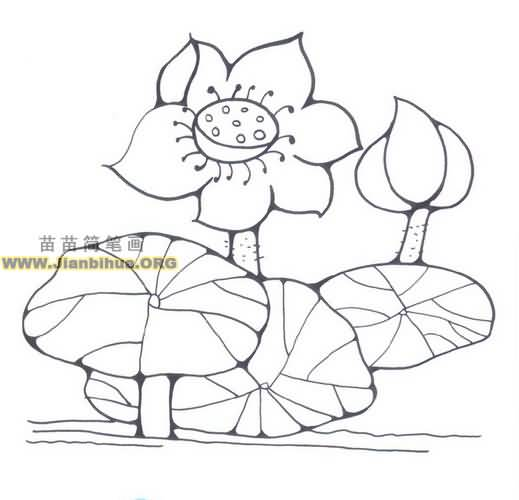 花瓣网水插画手绘图片