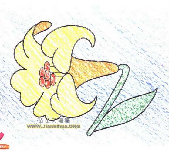白合花简笔画图片