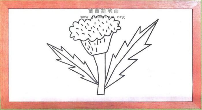 鸡冠花简笔画