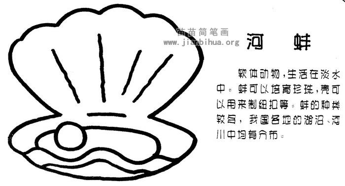 河蚌简笔画
