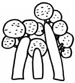 桦树简笔画图片与知识