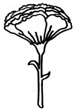 康乃馨简笔画图片与知识