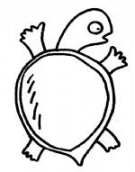 甲鱼简笔画、儿歌与知识