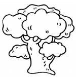 槐树简笔画、儿歌与知识