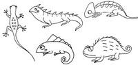 蜥蜴怎么画简笔画图解