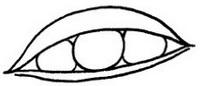 荷兰豆怎么画简笔画图解