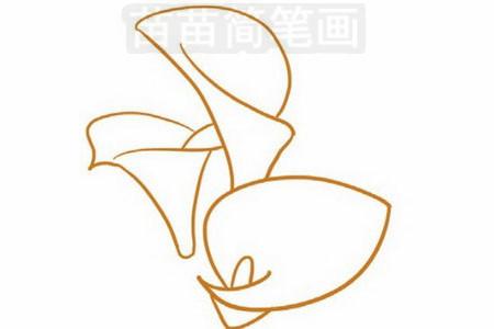 马蹄莲简笔画图片步骤三