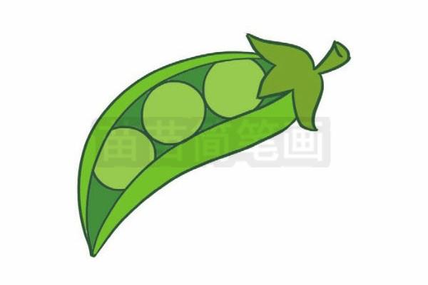 豌豆简笔画图片步骤四