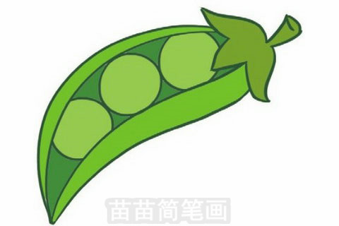 豌豆简笔画大图