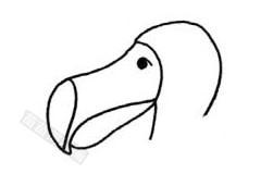 渡鸟简笔画图片步骤一