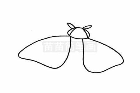 飞蛾简笔画图片步骤二