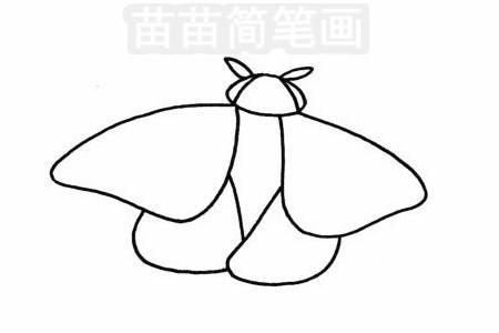 飞蛾简笔画图片步骤三
