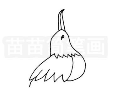 军舰鸟简笔画图片步骤二