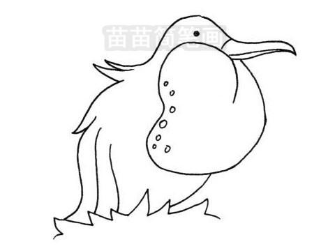 军舰鸟简笔画图片大全作品三
