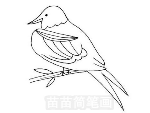 军舰鸟简笔画图片大全作品五