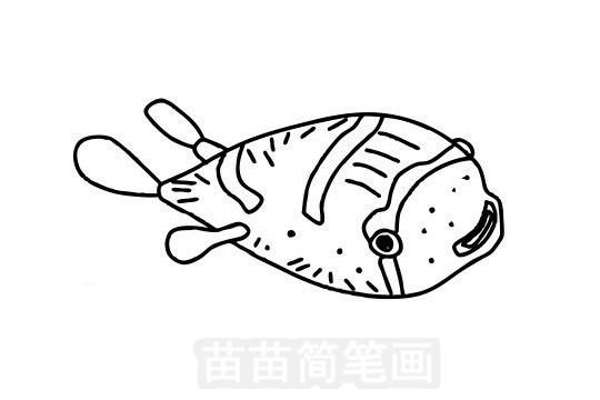 刺豚简笔画图片大全作品五