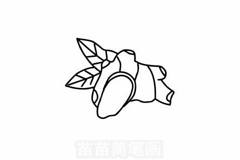 生姜简笔画大图