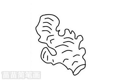 生姜简笔画图片大全作品二