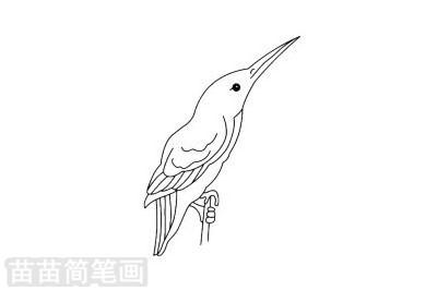 翠鸟简笔画图片大全作品二