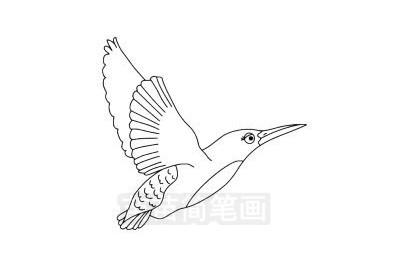翠鸟简笔画图片大全作品三