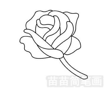 玫瑰花简笔画图片步骤四