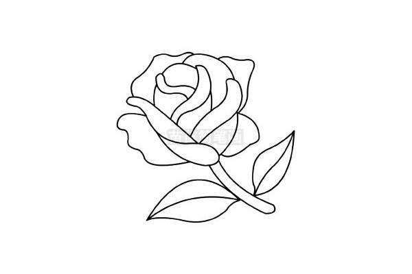 玫瑰花简笔画图片步骤五