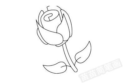 玫瑰花简笔画图片大全作品四