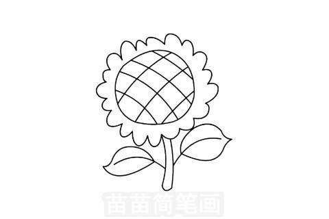 向日葵简笔画大图
