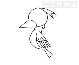 啄木鸟简笔画图片步骤二