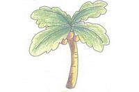 椰子树简笔画简单画法