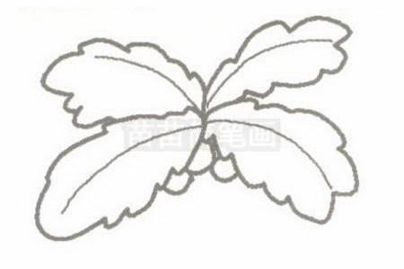 椰子树简笔画图片步骤二
