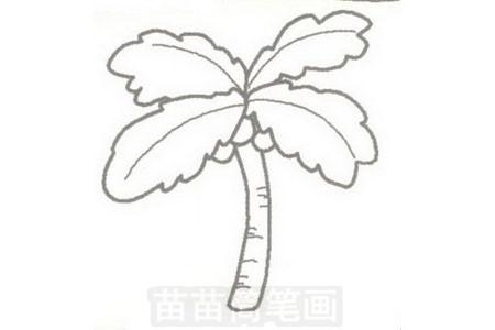 椰子树简笔画图片步骤三