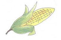 玉米简笔画简单画法