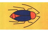 蟑螂简笔画怎么画
